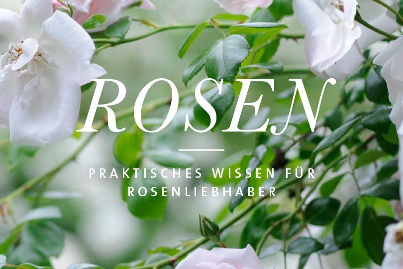 Rosen Ebook